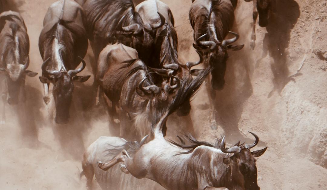 Inspiring Soho - Tanzania - Búfalos